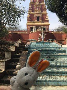 india-conejito-templo-hindu
