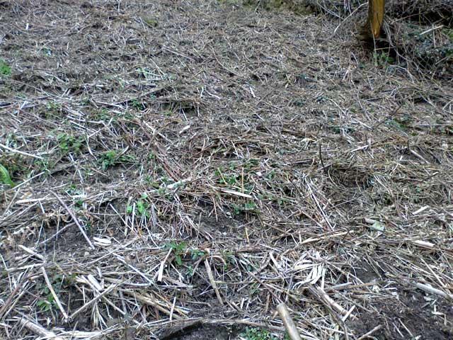 Preparando la tierra de los semilleros en la huerta - Tierra para semilleros ...