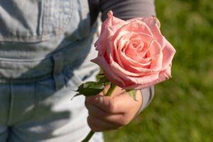 rose-3415370_640-1