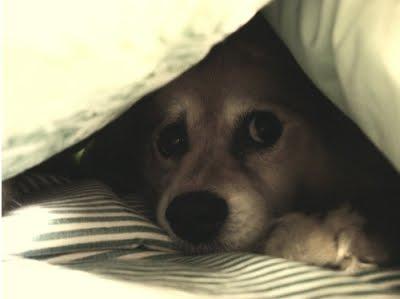 Alguien conoce esta perra que mamaacute guevo bien rico - 5 3