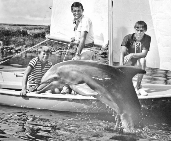 """1965: The """"Flipper"""" series, which ran from 1964 - 1967, employed seven dolphins to play the lead roll with Tommy Norden, left, Brian Kelly and Luke Halpin."""